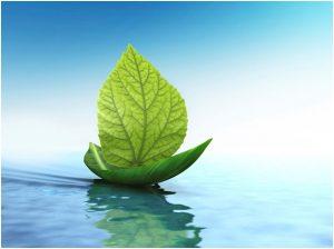 leafboat